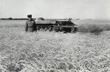 1946, October 14. AA. RUSSIA TODAY. A bemedalled Red Army captain stands in a field of grain that grows around a knocked-out tank. NEA-ACME Photo by John Stroem (Front)