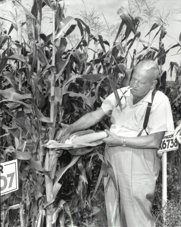 1959, August 27. CA. Coon Rapids, Iowa. KHRUSHCHEV WANTS TO SEE HIM. Roswell Garst, 61, above, examining a stand of hybrid corn on his Coon Rapids, Iowa, farm, is one man Soviet Premier Khrushchev says he wants to see while in the United States. Garst, who has twice visited Russia, met Khrushchev previously. N.E.A. Photo (Front)